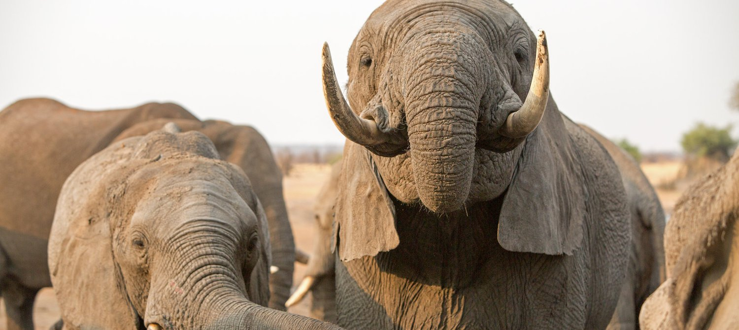 600 Elephants to Get Relocated as Severe Drought Ravages Zimbabwe