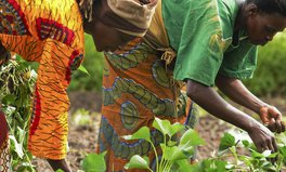 Article: Investing in female farmers to lift communities out of poverty