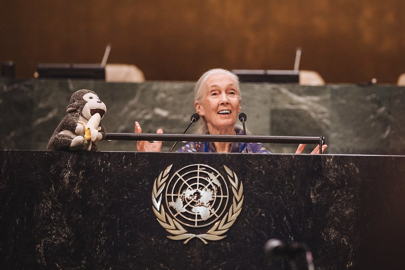 Dr Jane Goodall delivering a speech at the United Nations General Assembly.