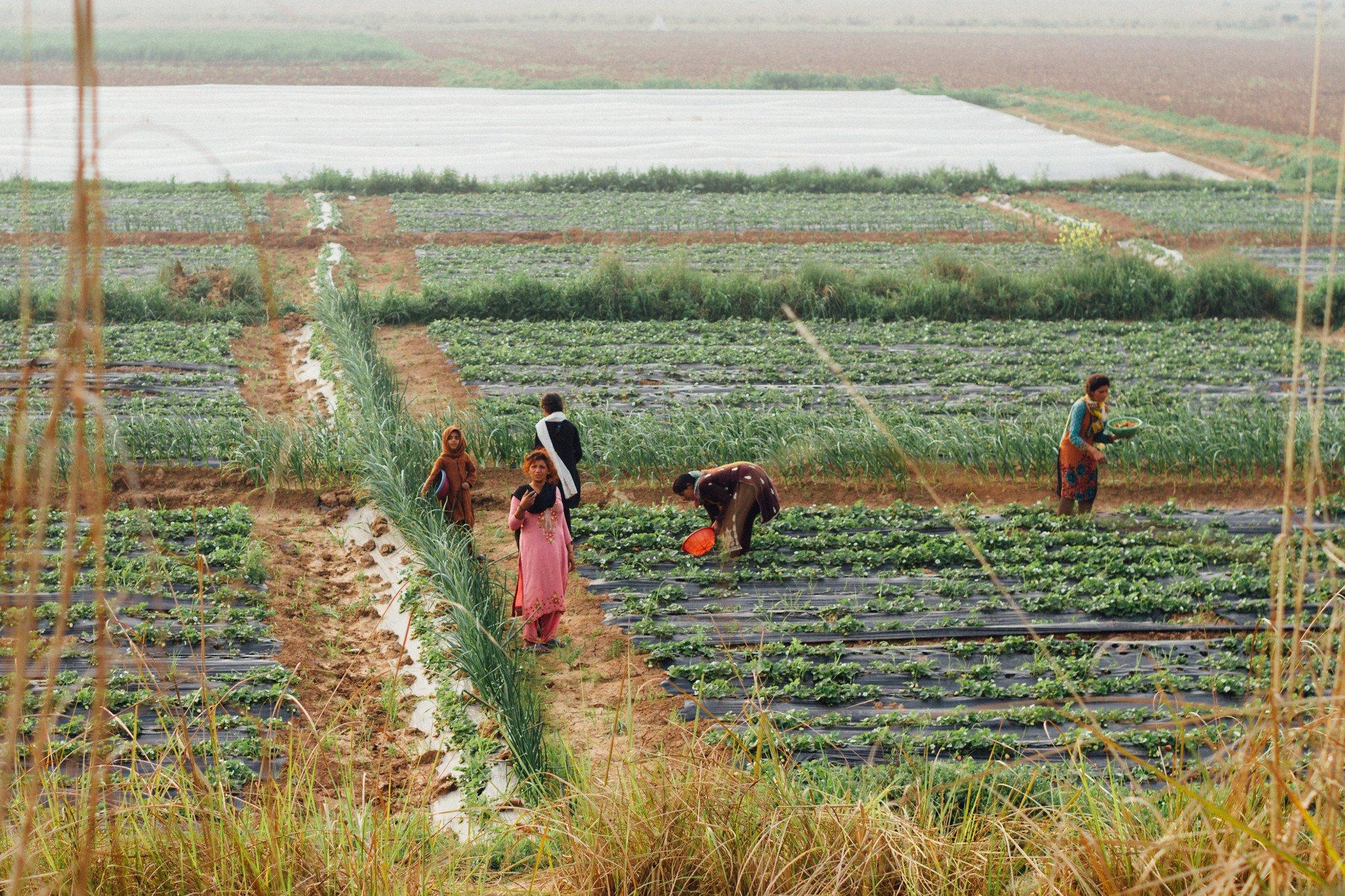 Pakistan Women Agriculture