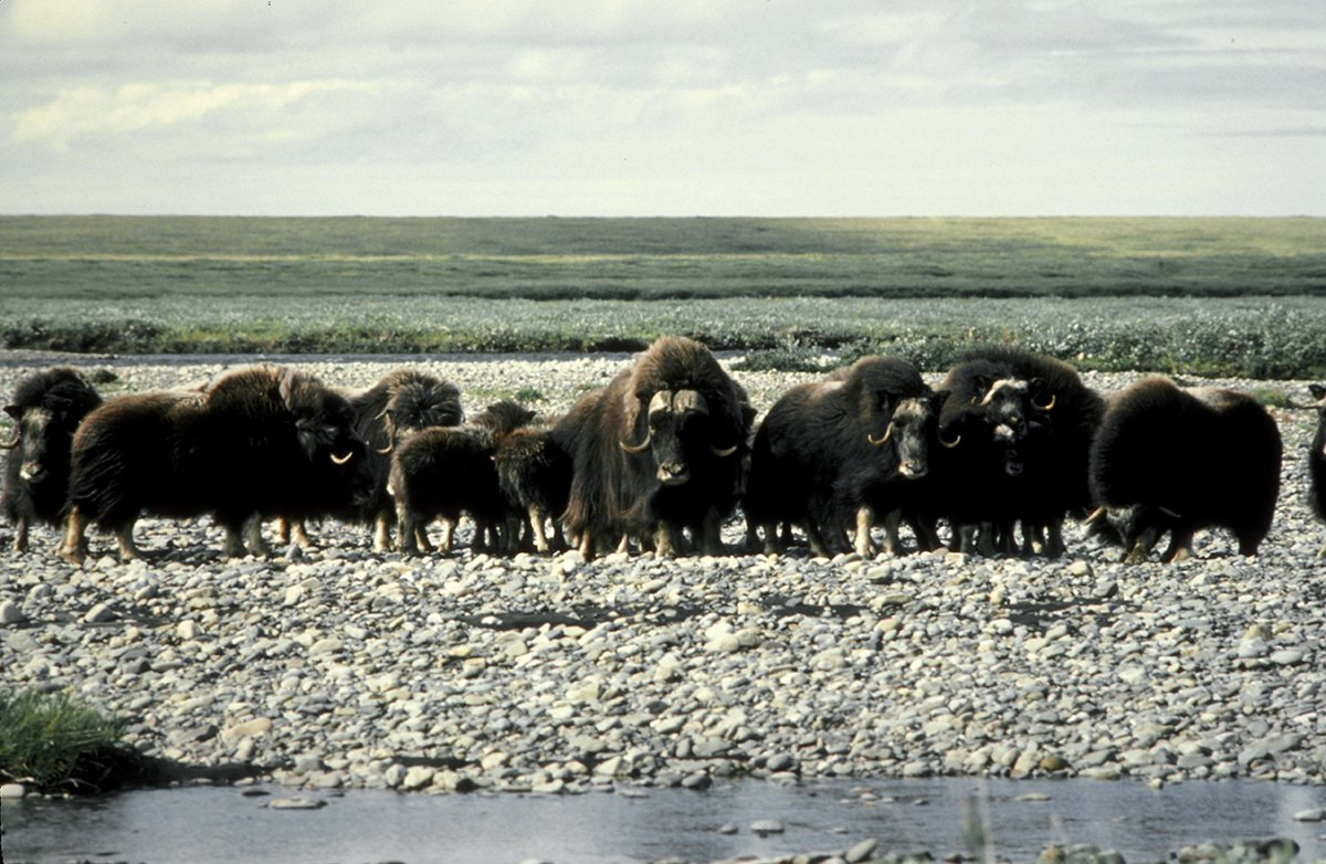 Arctic-National-Wildlife-Refuge-002.jpg