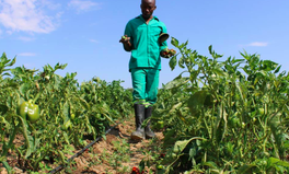 Artículo: Zimbabwe Farmers Are Growing Vegetables to Fight Drought