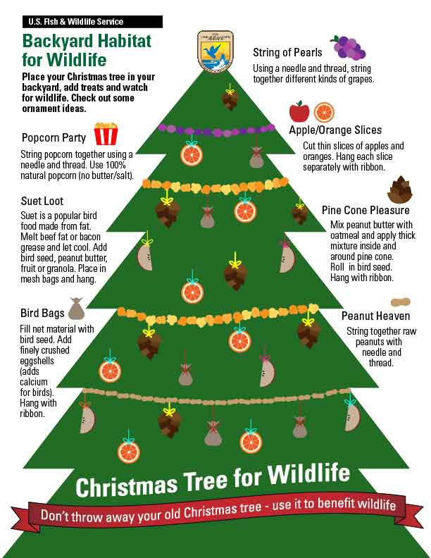 7 Ways To Recycle Your Christmas Tree And Help The Planet