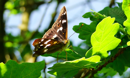 Article: Researchers Are Using Moths and Magnets to Prevent Genetic Diseases