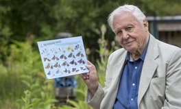 Article: David Attenborough Literally Wants You to Count Butterflies to Distract From Brexit