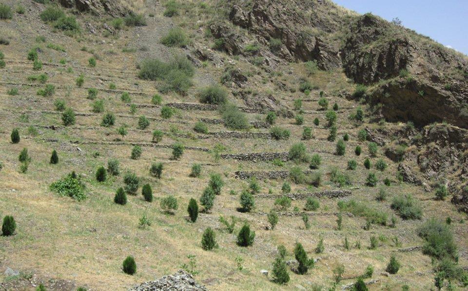 Afghan fbook.jpg