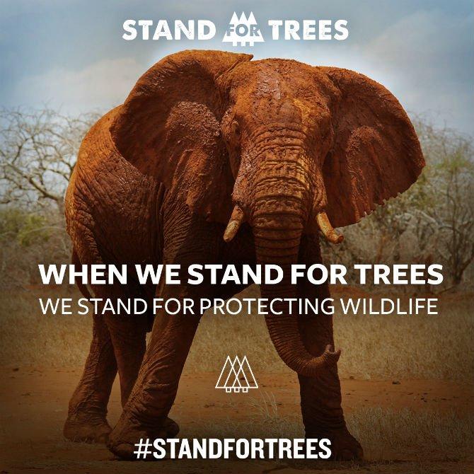 stanf dor trees stand for wildlife.jpg