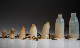 Artikel: coole Erfindung kompostierbare Wasserflaschen