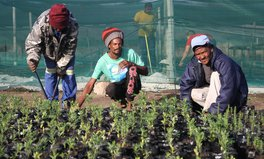 Article: Why Nedbank Has Invested More Than R264 Million in Conservation Projects