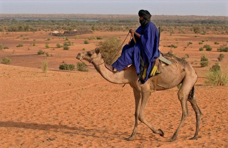 Mali Elephant Project.jpg