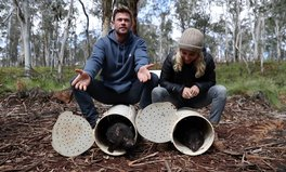 Article: Chris Hemsworth Helps Return Tasmanian Devils to Mainland Australia for First Time in 3,000 Years