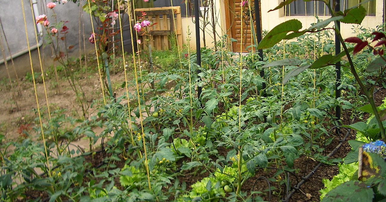 9 Tips for Turning Your Front Yard Into a Farm
