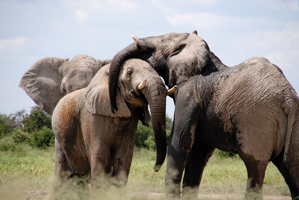 savanna_elephants.jpg__1500x670_q85_crop
