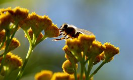 Artikel: The EU Wants to Cut Pesticide Use in Half by 2030 to Save Bees