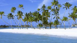 palm_trees_on_island_maldives_indian_oce