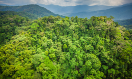Article: Rainforests Could Be Wiped Out in 100 Years — Here's How to Prevent That