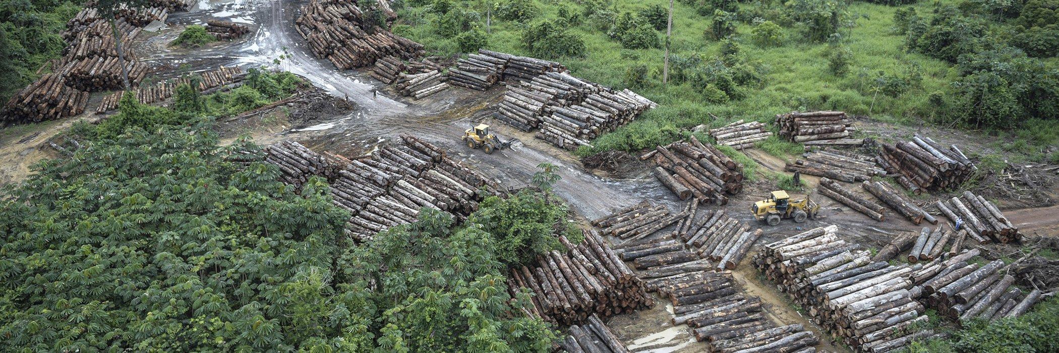 Brazil-Deforestation-Jair Bolsonaro-Environment.jpg