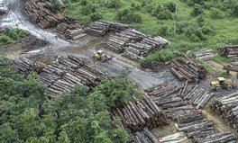 Artikel: How Deforestation Increases the Risk of Disease Outbreaks Like COVID-19