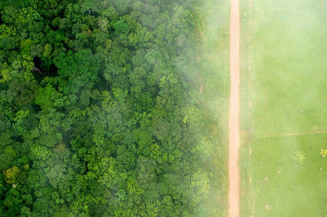 CIFOR-deforestation-flickr.jpg