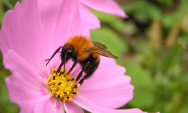 Article: Vital Bee Populations Are Making a Comeback in US