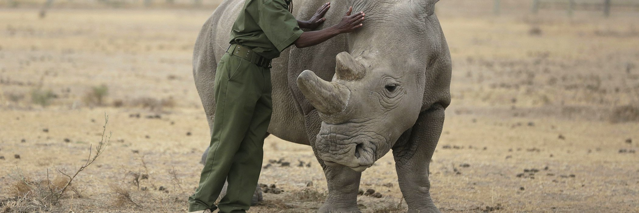 Northern-White-Rhinos.jpg