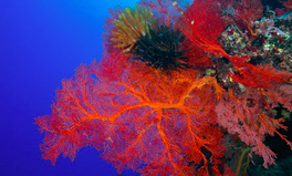 Artículo: One of the Last Pristine Coral Reefs Gets World's Strongest Legal Protection