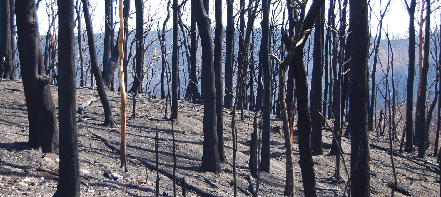 These Animals Could Now Face Extinction Due to the Australian Bushfires