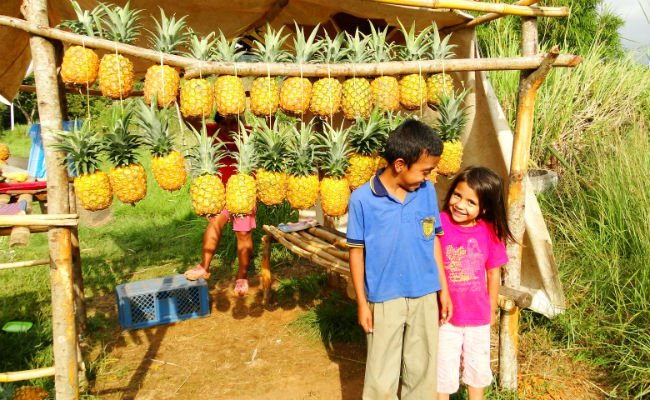 Colombia pienapple smiles.jpg
