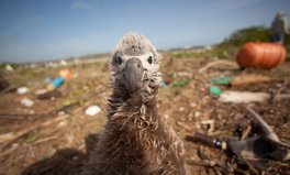 Artículo: Plastic Chemicals Can Build Up in Seabirds' Bodies, Study Finds