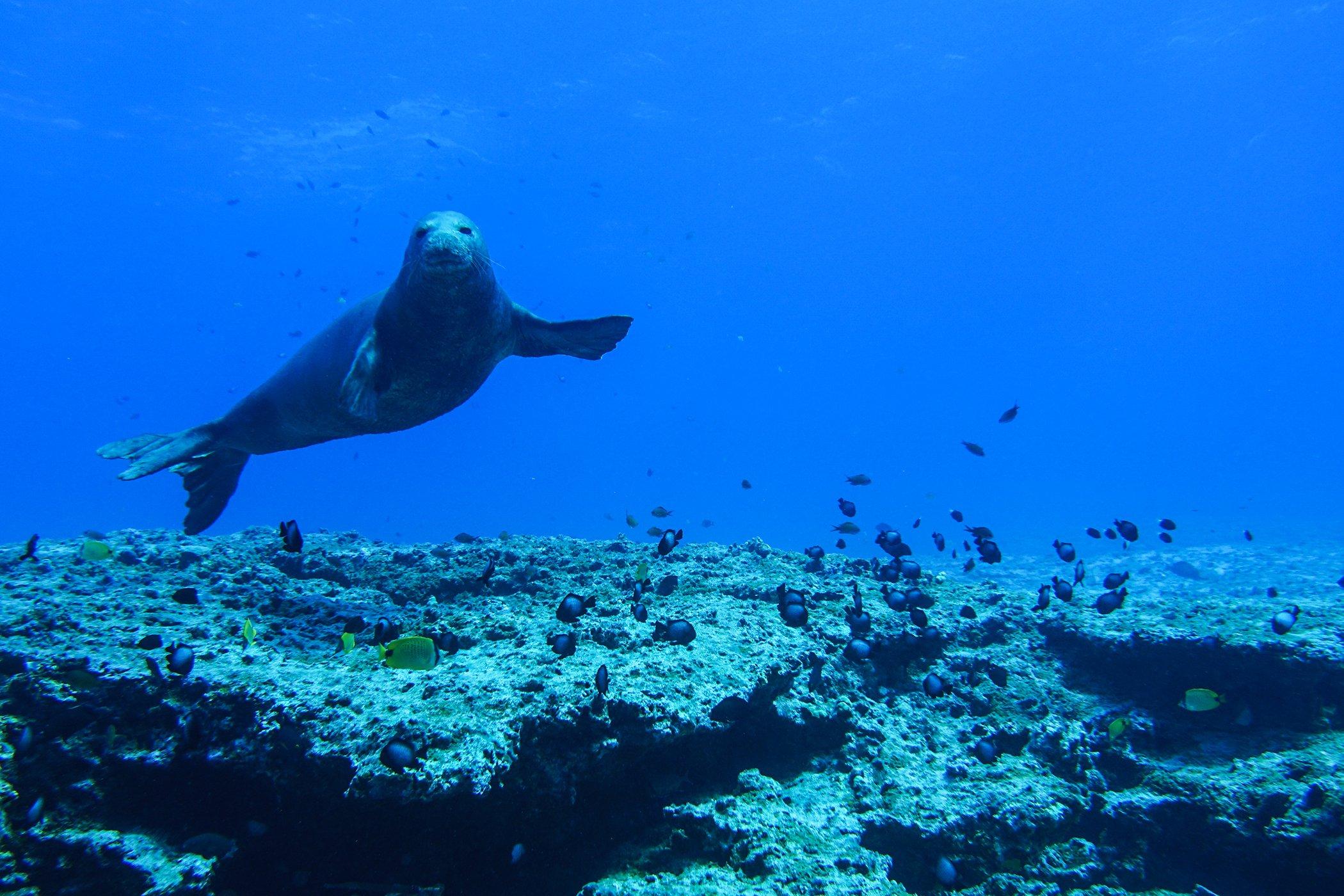 Biodiversity-Protect-Oceans-Papahanaumokuakea Marine National Monument.jpg