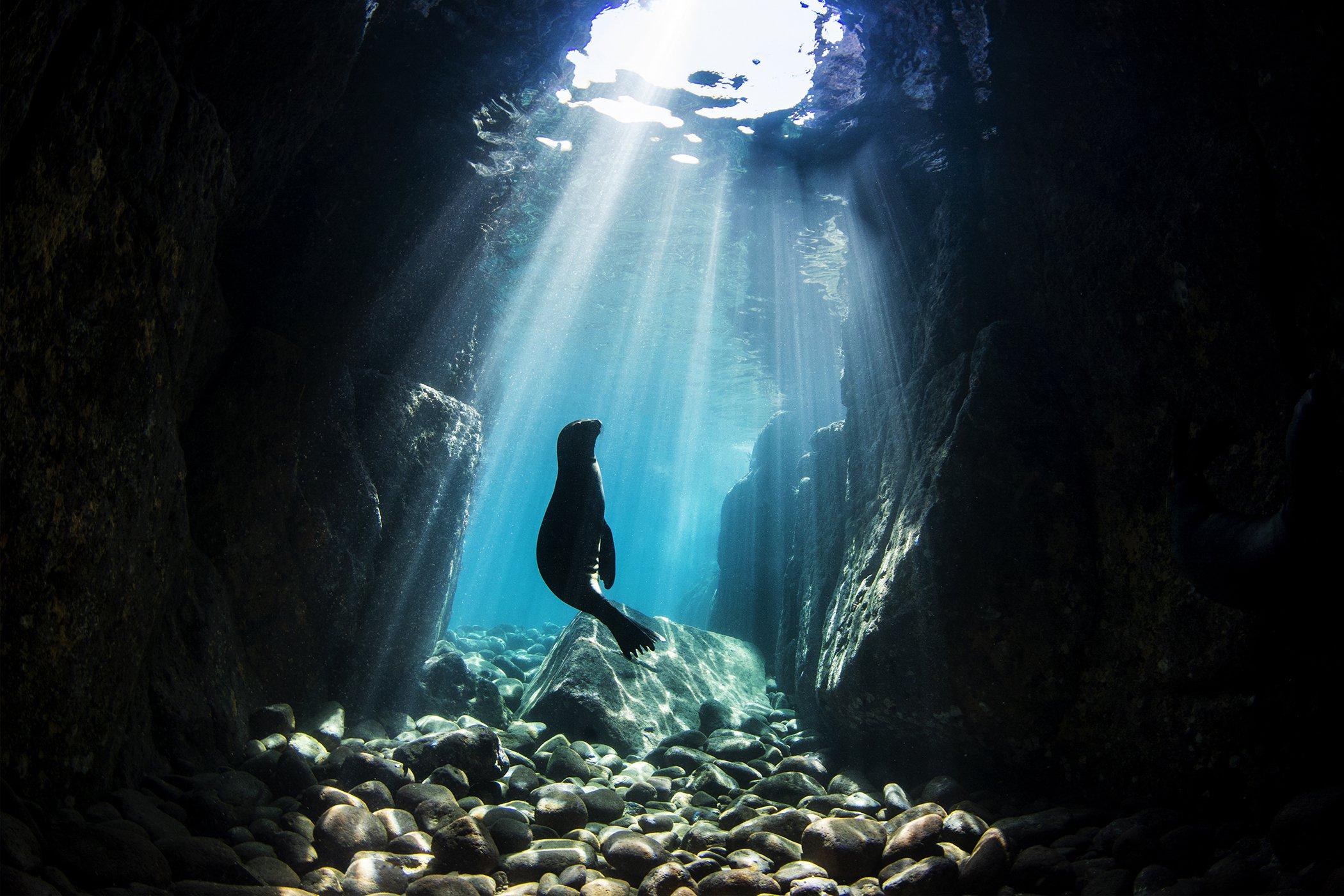 2021 UN WOD Underwater Seascapes Nur Tucker Winner.jpg