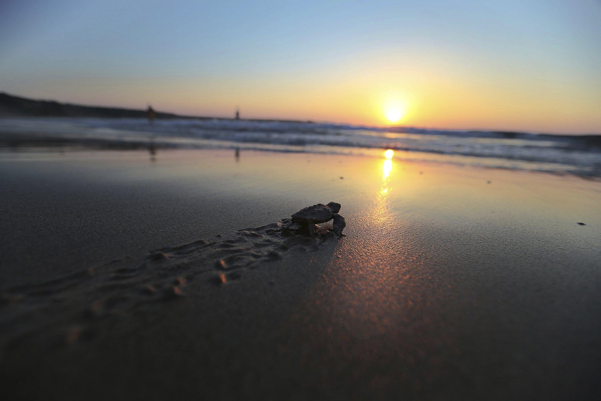 Turtle-Conservaction-Cyprus.jpg