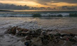 Article: A shocking study reveals the damage caused by our plastic obsession
