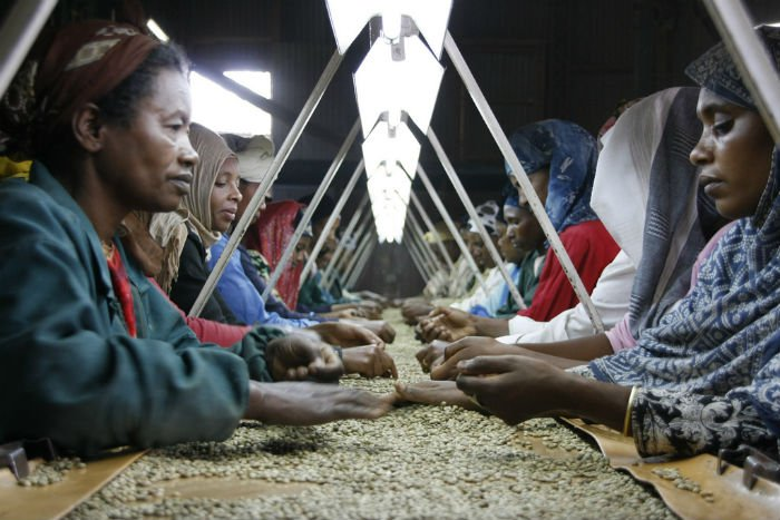 coffee industry ethiopia.jpg