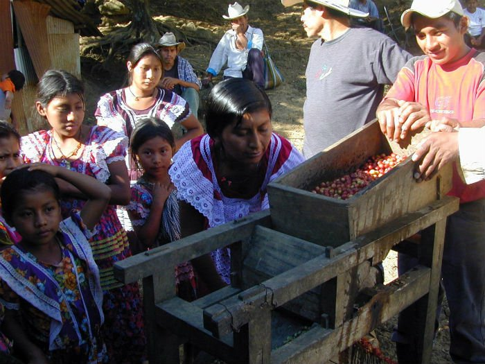 depulping chiapas coffee.jpg