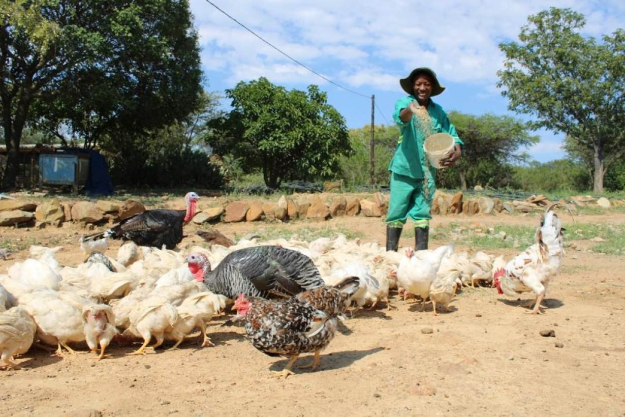 ZWbusani-feeding-chickens-small.jpg