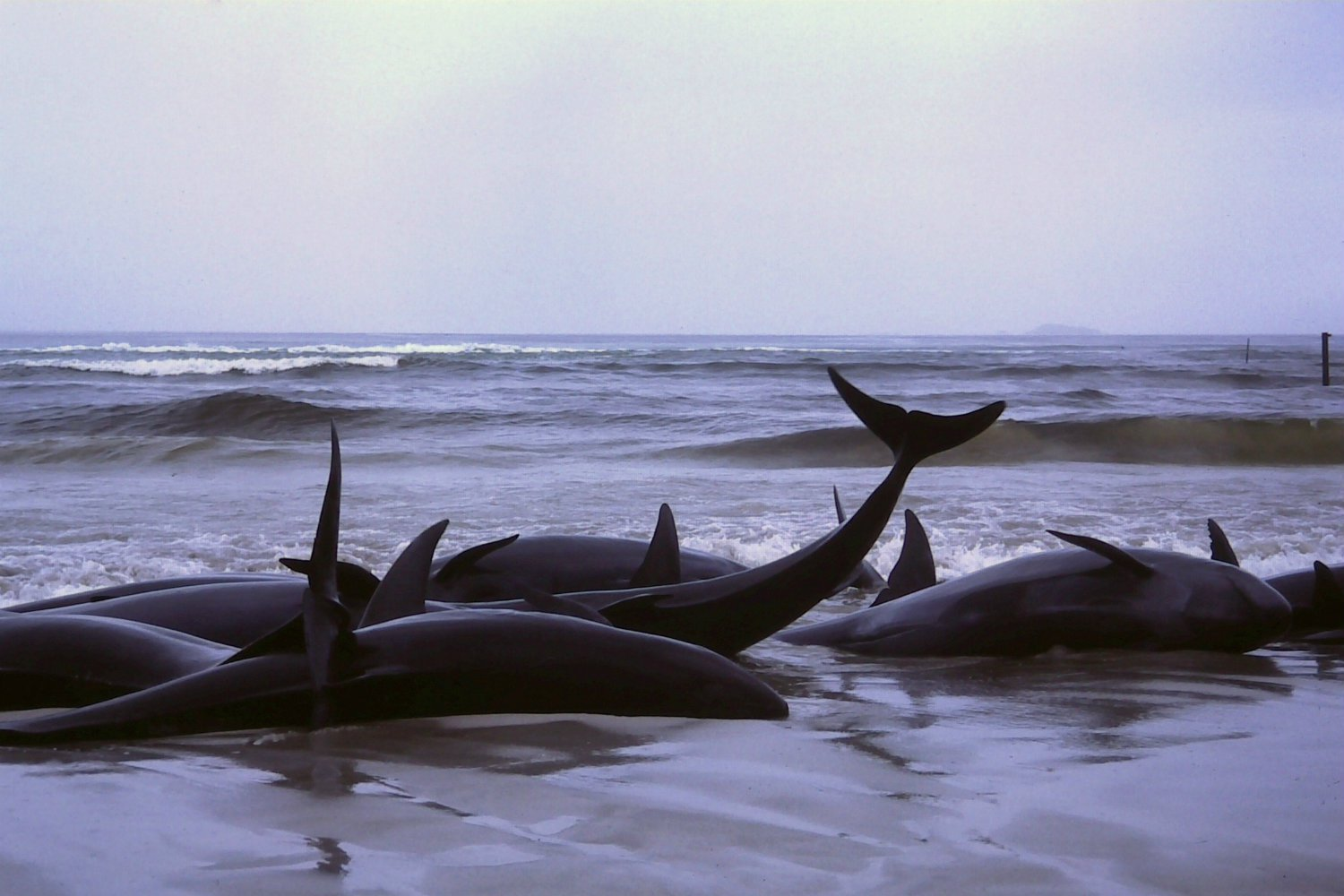 Beached Whales.jpg