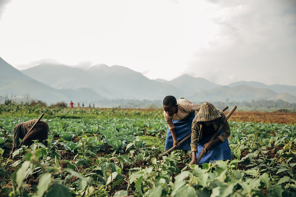 farming-africa-food security