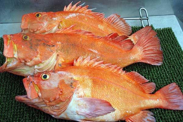 yelloweye-rockfish_gst001.jpg