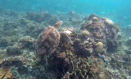Article: Half of Taiwan's Reefs Have Been Bleached and a Third Are Dying: Report