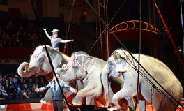 Artikel: UK Bans All Wild Animals From Circuses By 2020