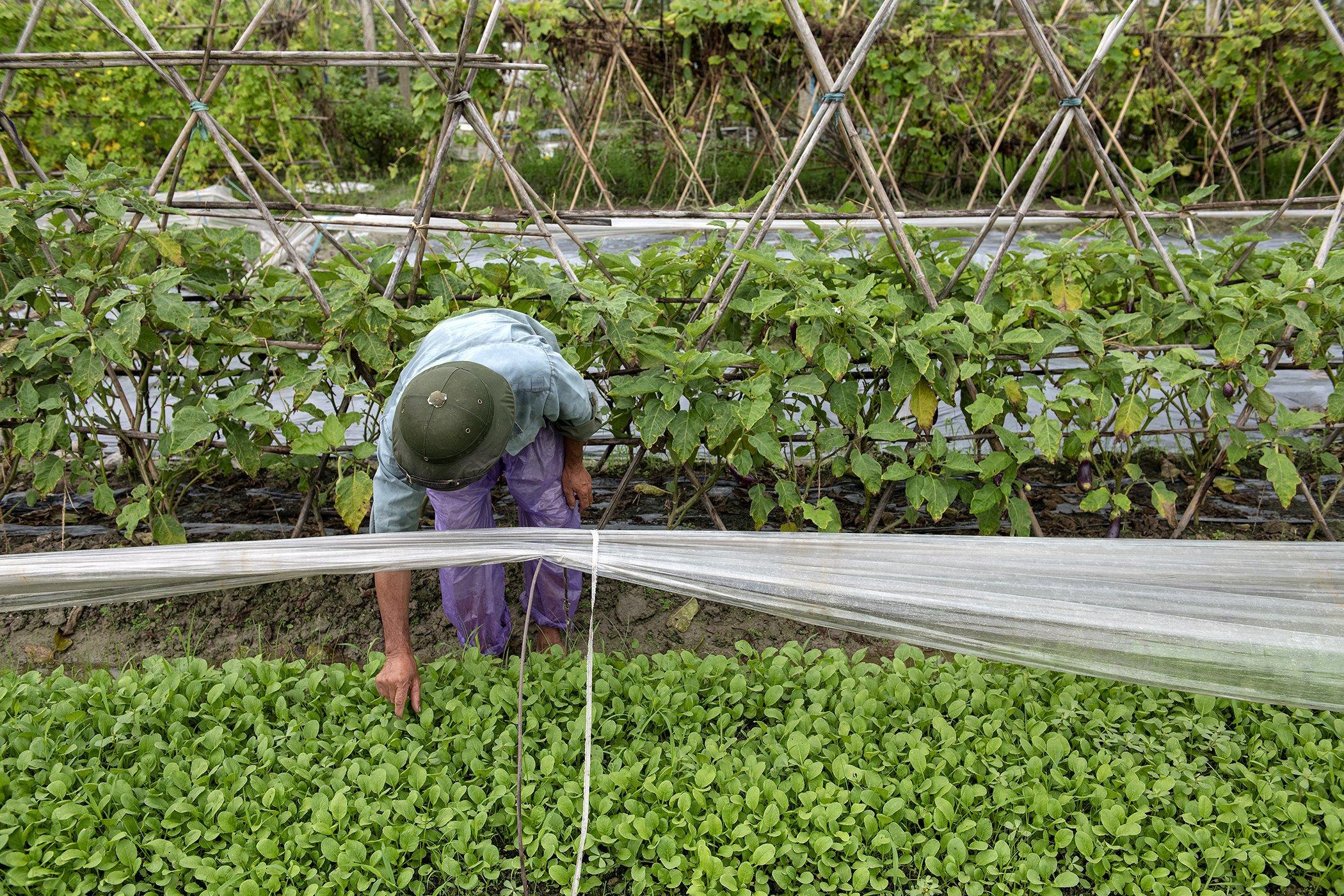 hunger-farmer-soultion-cgiar.jpg__2100x1400_q85_crop_subject_location-1050,700_subsampling-2_upscale.jpg