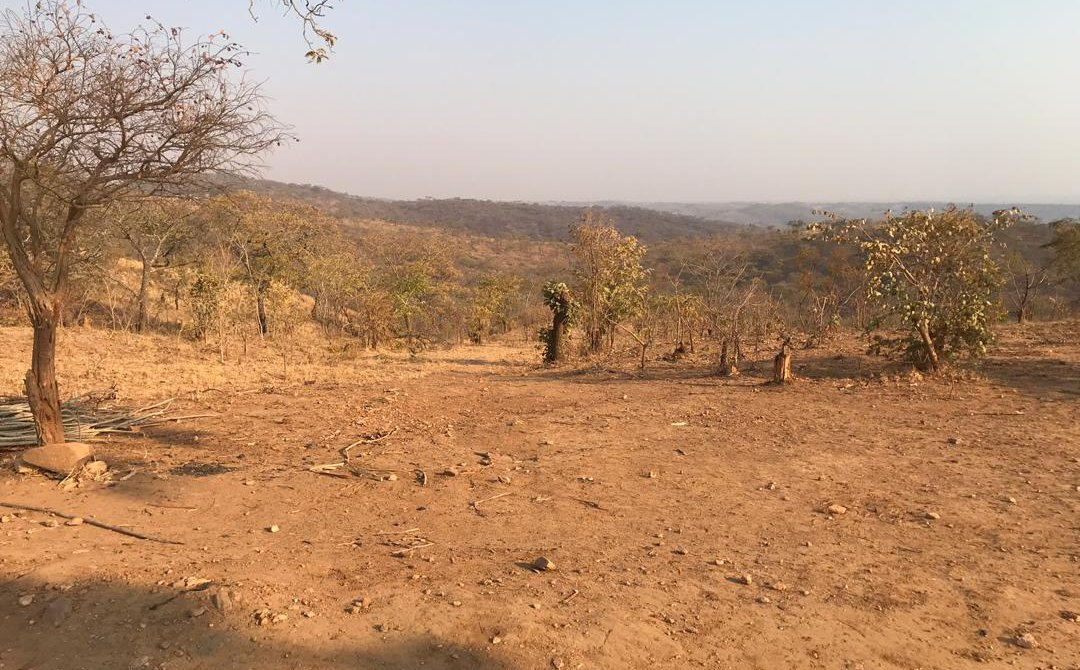 Nearly 2.3 Million Zambians Face Starvation as a Result of Low Rainfall