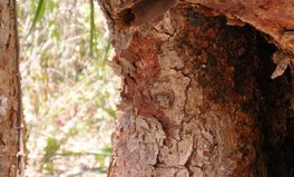Article: Sweet talking to stingless bees in the Yucatan
