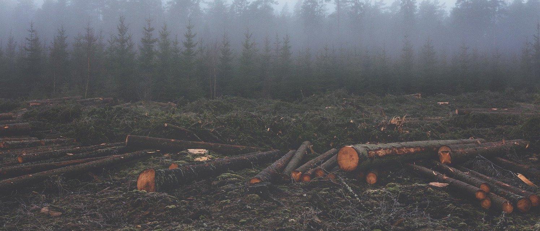 stand for trees deforestation hero.jpg