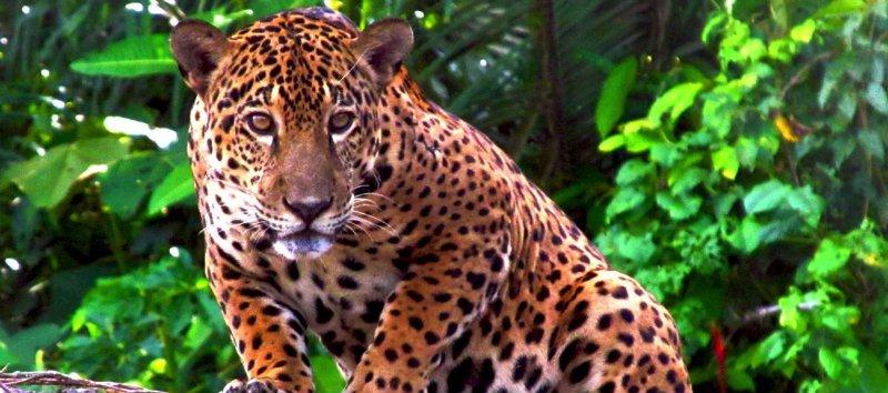 orange leopard.jpg