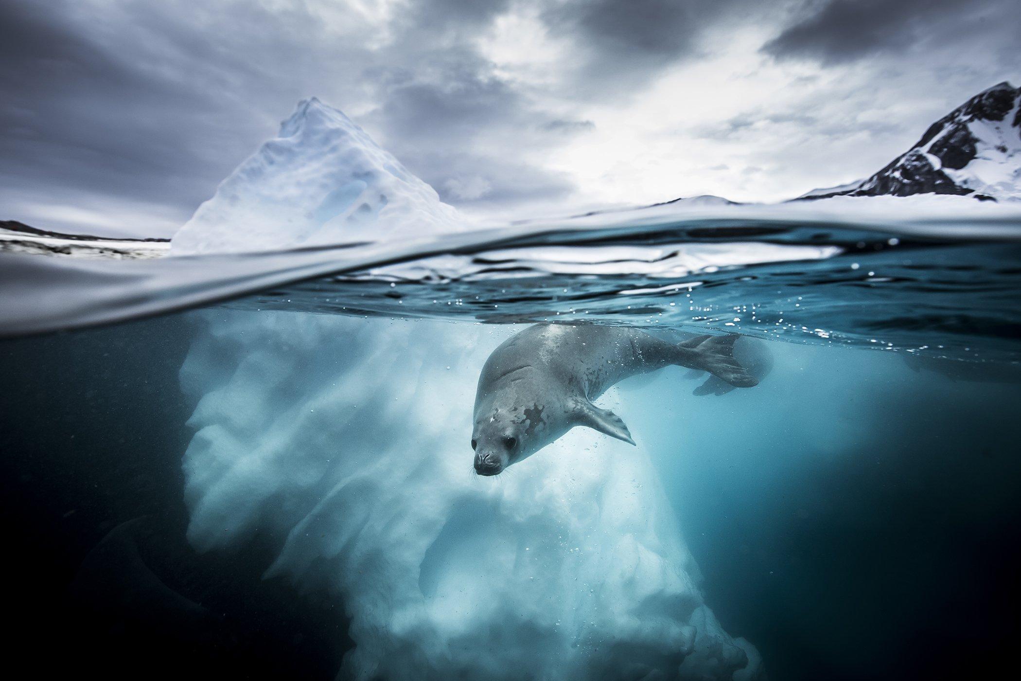 UnderwaterPhotographerOfTheYear_102JESSICAFARRER_002.jpg