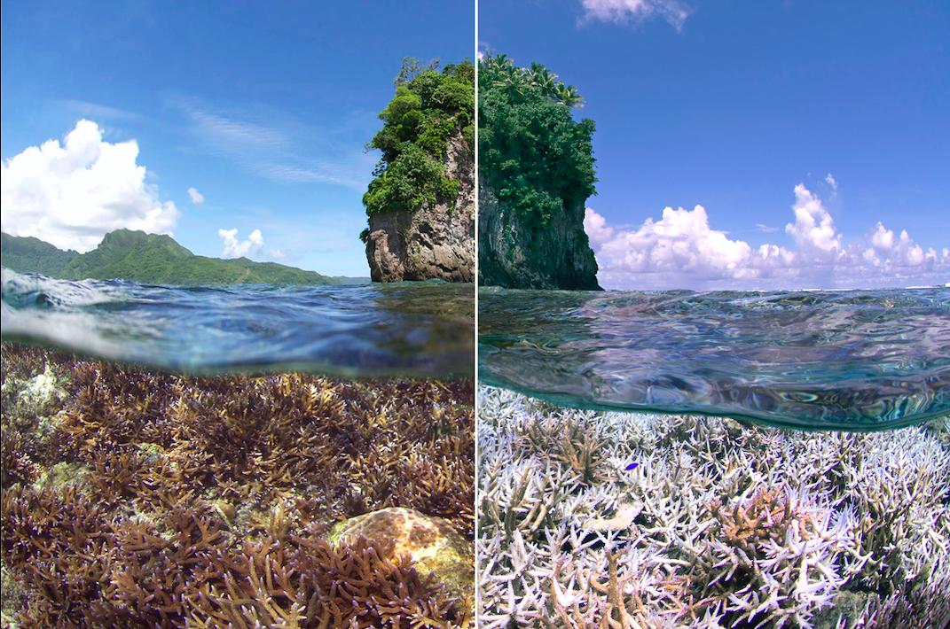 the-ocean-agency-korallenriff-hoffnung-studie.png