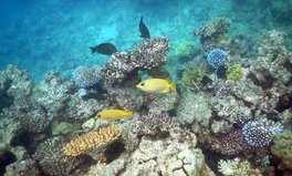 Article: Great Barrier Reef Could Face Its Most Extreme Bleaching Event Yet