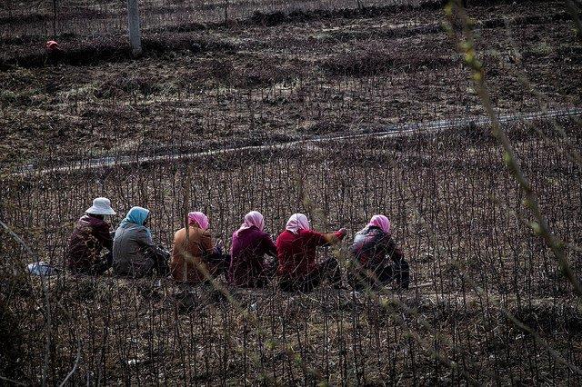 women workers in field